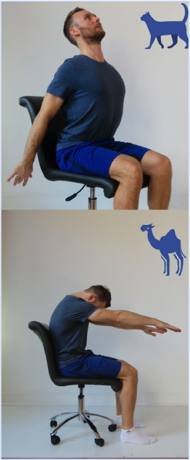 Cat Camel Exercise | Dr Alex Ritza | Downtown Toronto Chiropractor